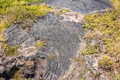 Вегетация на поле лавы, Гаваи Стоковое фото RF