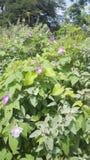 вегетация одичалая Стоковое Фото