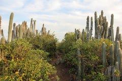 Вегетация отмели в юговосточной Бразилии Стоковые Изображения