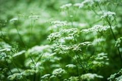 вегетация одичалая Стоковые Изображения