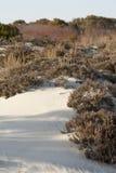 Вегетация песчанных дюн на Assateague, Мэриленде Стоковые Фотографии RF