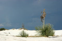 вегетация пустыни Стоковые Изображения RF