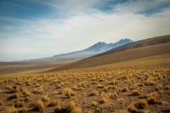 Вегетация пустыни Atacama - Чили Стоковая Фотография RF