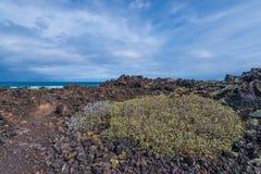 Вегетация пляжа Стоковая Фотография RF