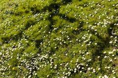 вегетация луга Стоковые Изображения RF