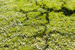 вегетация луга Стоковое Изображение