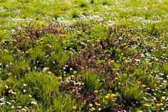 вегетация луга Стоковая Фотография
