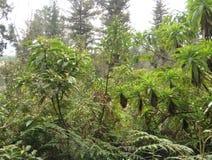 Вегетация Стоковые Изображения RF