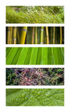 Вегетация Стоковая Фотография RF