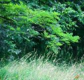вегетация Стоковые Фотографии RF