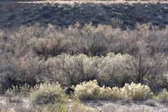 Вегетация Riparian вдоль реки девственницы с вербами и щетка в зиме стоковые фотографии rf