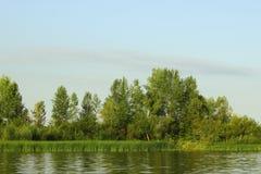 Вегетация riparian лета стоковое изображение