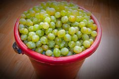 Ведро белых виноградин полное для делать вино стоковая фотография