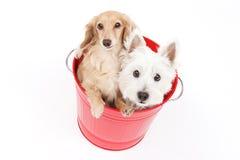 Ведро и собаки Стоковые Изображения
