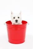 Ведро и собаки Стоковая Фотография RF