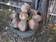 Ведро кокосов Стоковая Фотография RF