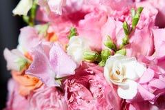Ведро пиона цветет конец-вверх Стоковые Фото