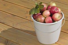 ведро яблок Стоковое Фото