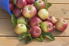 ведро яблок Стоковое Изображение