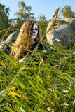 Ведьма на море на хеллоуине Стоковая Фотография RF