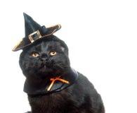 ведьма шлема кота стоковое фото