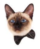 ведьма pussycat смычка Стоковые Фото