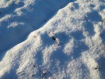 везде снежок Стоковое Изображение RF