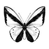 Векторные графики эскиза бабочки Стоковое фото RF