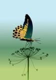 вектор бабочки Стоковые Фотографии RF