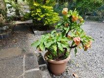 вектор бака иллюстрации цветка Стоковые Фотографии RF