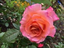 вектор бака иллюстрации цветка Стоковая Фотография