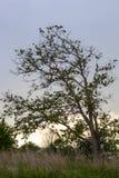 вектор вала захода солнца иллюстрации сиротливый красивейший заход солнца ландшафта стоковые фотографии rf