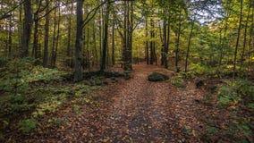 вектор вала иллюстрации осени имеющийся листья осени цветастые Листья на земле Осень tr Стоковое фото RF
