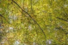 вектор вала иллюстрации осени имеющийся листья осени цветастые Листья на земле Осень tr Стоковая Фотография