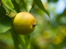 вектор вала иллюстрации яблока красивейший Стоковая Фотография