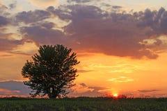 вектор вала захода солнца иллюстрации сиротливый Стоковая Фотография