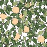 вектор вала иллюстрации яблока красивейший Чертеж руки с ветвями яблони декоративная картина безшовная Стоковое Изображение RF