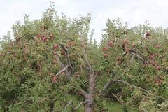 вектор вала иллюстрации яблока красивейший Стоковые Изображения RF