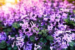 вектор весны иллюстрации предпосылки красивейший Стоковое Фото