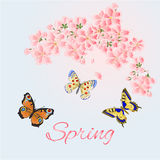 Вектор вишни и бабочек предпосылки весны Стоковые Фото