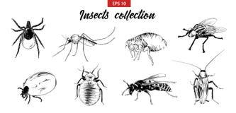 Вектор выгравировал иллюстрации стиля для плакатов, логотипа, эмблемы и значка Эскиз руки вычерченный установил насекомых, мухы,  иллюстрация вектора