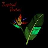 Вектор вышивки тропический Стоковое Фото