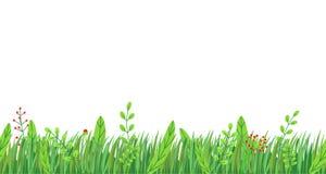 Вектор границы травы весны безшовный Флористический элемент завода природы весеннего времени изолированный на белой предпосылке в иллюстрация штока
