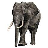 Вектор графиков эскиза слона стоковые изображения