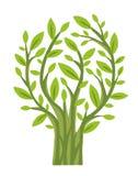 Вектор дерева весны зеленый бесплатная иллюстрация