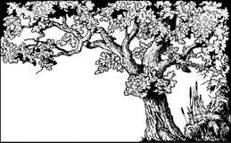 вектор дуба рамки иллюстрация вектора