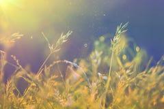 вектор лета иллюстрации предпосылки красивейший Стоковая Фотография