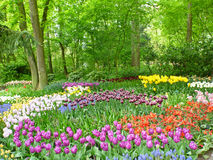 вектор детального чертежа предпосылки флористический Красные тюльпаны Стоковое Изображение
