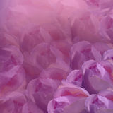 вектор детального чертежа предпосылки флористический предпосылка цветет пинк Свет-розовые розы цветков флористический коллаж тюль Стоковые Изображения