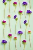 вектор детального чертежа предпосылки флористический Цветки ветреницы на сини стоковые фото